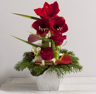 Le pouvoir des fleurs d cembre 2013 for Amaryllis en bouquet