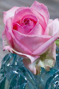 Rose avalanche-sorbet