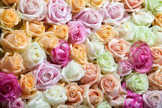 Rose-avalanche-mélange