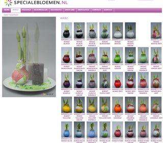 Amaryllis-green8-shop