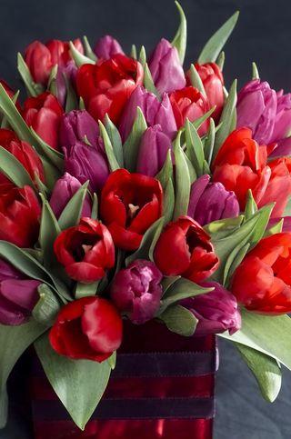 Tulipes-bouquet