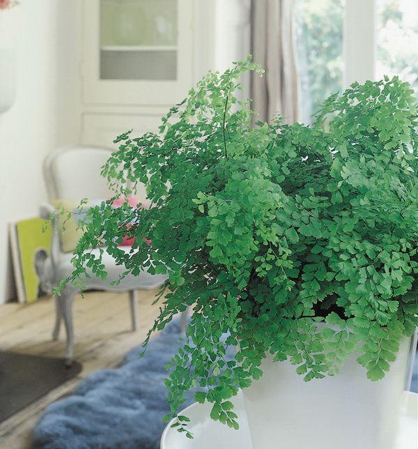 5 conseils pour la plante du mois la foug re le for Plante 6 mois