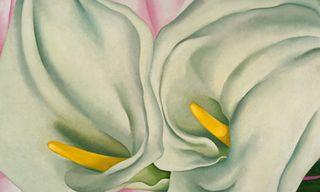Two-Calla-Lillies-on-Pink-Georgia O 'Keeffe