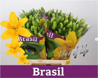 Lis Brasil
