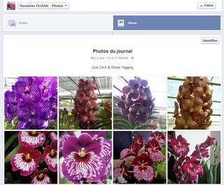 Hawaiian orchids_01