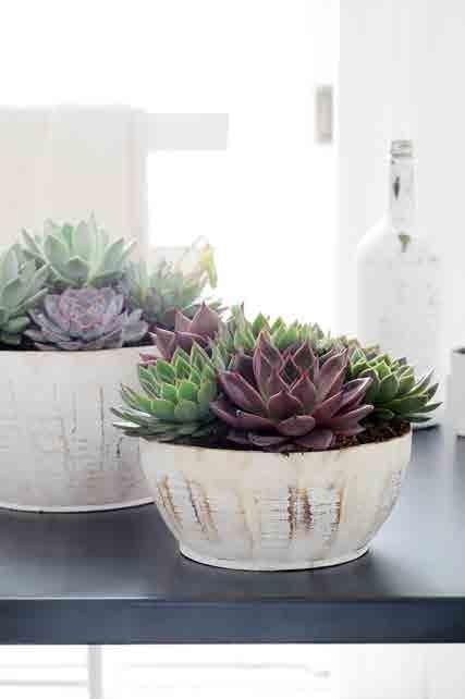 plante de l 39 t et de la s cheresse l 39 ech v ria le. Black Bedroom Furniture Sets. Home Design Ideas