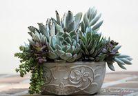 Succulentes_13