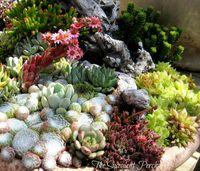 Succulentes_14