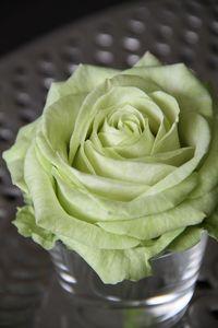 Rose-avalanche-Emerald
