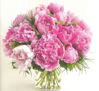 la pivoine fleur vedette du mois de mai le pouvoir des fleurs. Black Bedroom Furniture Sets. Home Design Ideas