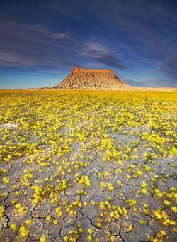 Badlands-fleurs_01