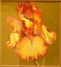 Fleur-pastel_Franck-Bonnaire_2