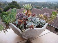 Succulentes-coupe