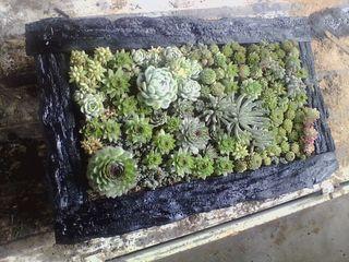 Succulente-composition