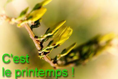 Printemps-3