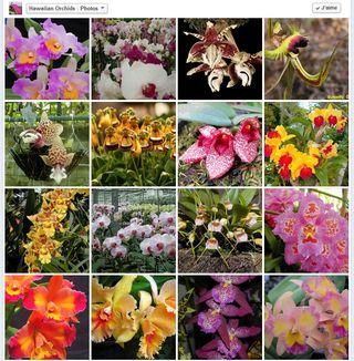 Hawaiian orchids_03