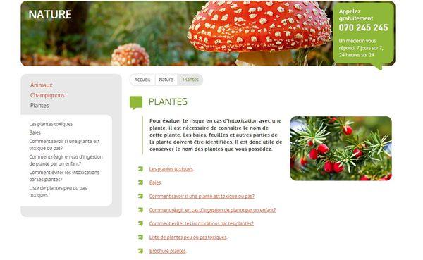 Liste des plantes toxiques le pouvoir des fleurs for Liste plantes