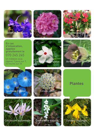 Liste Des Plantes Toxiques Le Pouvoir Des Fleurs