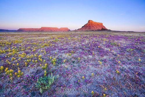 Badlands-fleurs_00