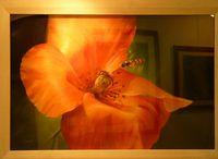 Fleur-pastel_Eliane-Marque_3