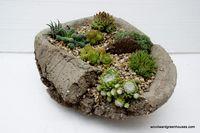 Succulentes_16