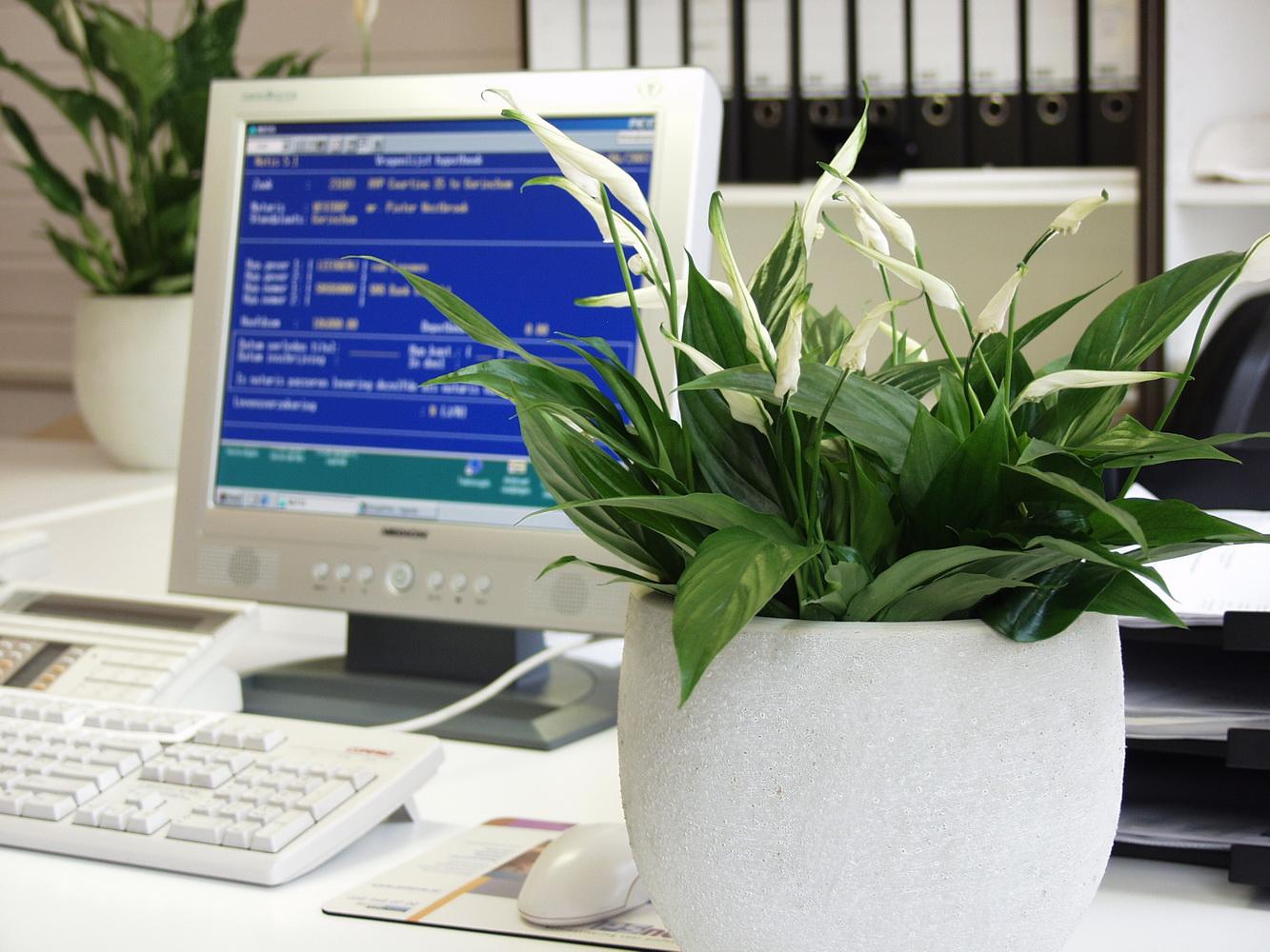 Top Le pouvoir des fleurs: plantes dépolluantes KT71