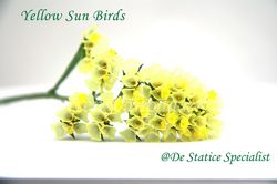 Statice-yellow_sun_birds