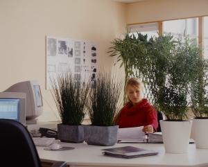 Plante au bureau_02