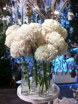 Chrysantheme_10