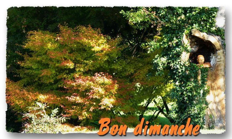 Dimanche automne