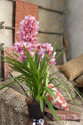 Orchidée Cymbidium_01