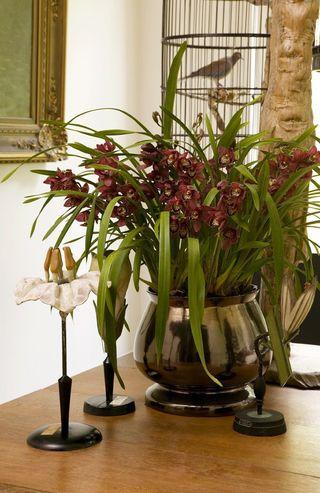 4 conseils d 39 entretien pour l 39 orchid e cymbidium le pouvoir des fleurs. Black Bedroom Furniture Sets. Home Design Ideas