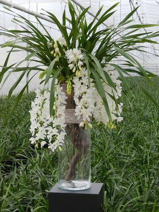 orchidee vanda salle de bain