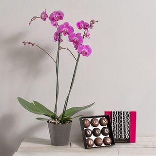 Interflora Orchidée et chocolat Fauchon