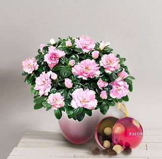 Interflora azalée rose et chocolat
