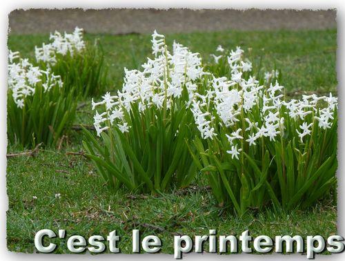 Dimanche printemps_redimensionner