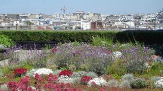 Toit végétalisé_palais de Chaillot