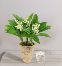 Interflora muguet racines