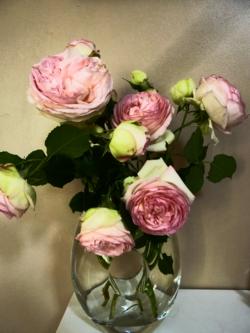 Roses Pierre de Ronsard_05