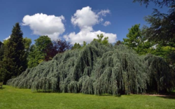 arbre de l'annee 2015