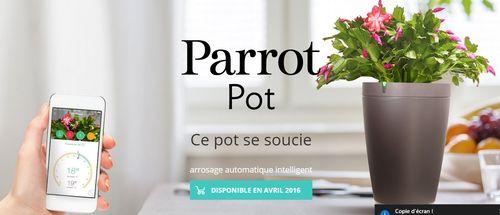 Parrot pot 1