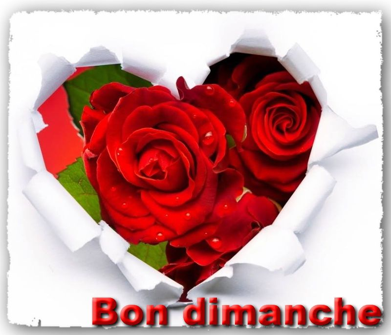Coeur roses rouges