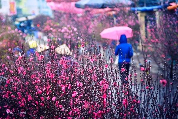 Les_marches_des_fleurs_1_CPV