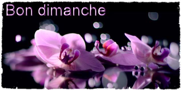 Orchids infos 4