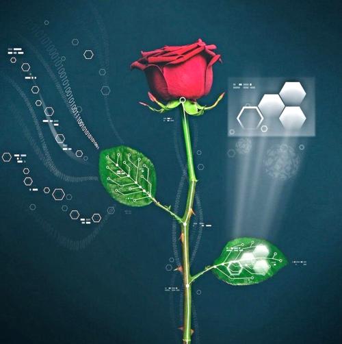 Rose électrique