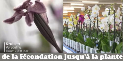 Ter Laak Orchidées