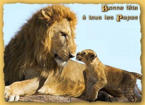 Lion f des peres 1