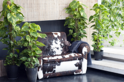 OHF_plantes vertes_01