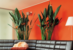 OHF_plantes vertes_03