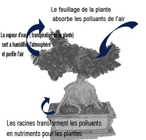 Plante_dépolluante_J-Bruffin